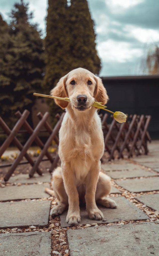 Jak zadbać o zdrowie psa?