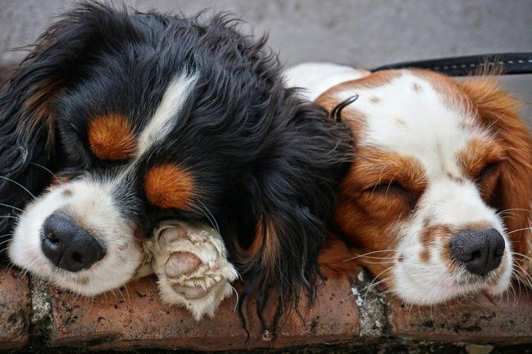 Solidne informacje o psach, które są łatwe do zrozumienia