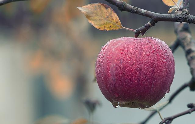 Czy zawsze zimą odpowiednio przechowujesz swoje jabłka?