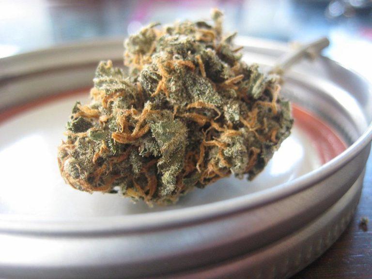 Uprawa marihuany na własny użytek